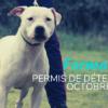 Formation Permis Détention #Oct19